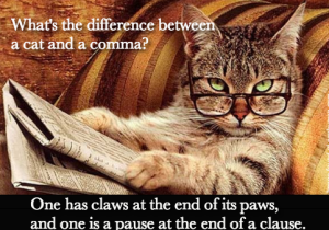 Grammarly knows more than any wise old cat.
