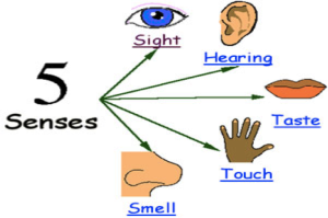 LearningWithTheFiveSenses2