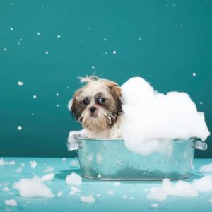 bathing your dog 1