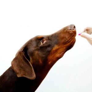 benadryl for dogs 3