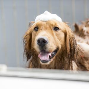 dog shampoo 8